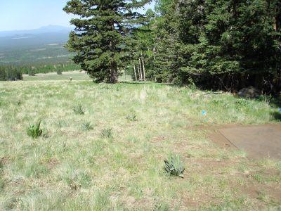 Arizona Snowbowl, Main course, Hole 8 Tee pad