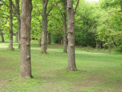 Lustig Park, Main course, Hole 2 Tee pad