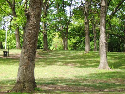 Lustig Park, Main course, Hole 5 Tee pad