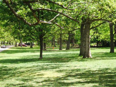 Lustig Park, Main course, Hole 9 Tee pad