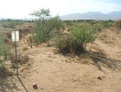 Cactus Flats, Main course, Hole 16 Tee pad