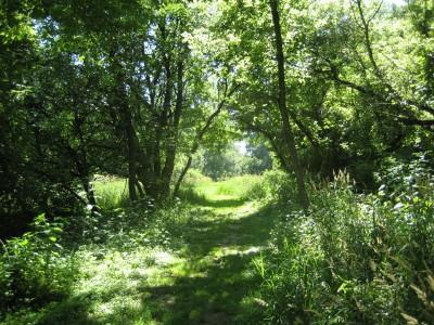 Middle Park, Main course, Hole 11 Tee pad