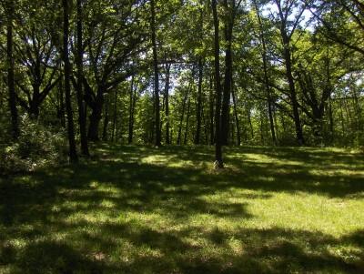 Walnut Ridge Recreation Area, Main course, Hole 12 Midrange approach