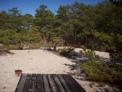 Cape Henlopen State Park, Main course, Hole 4