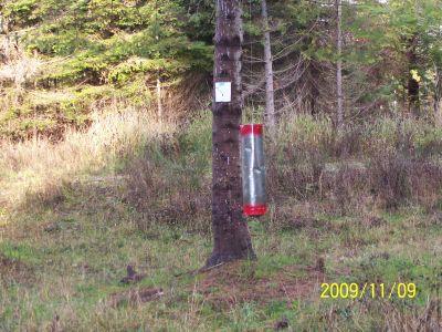 Black Creek Community DGC, Main course, Hole 7 Putt