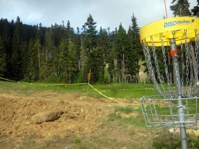 Mt. Washington Fly Zone, Main course, Hole 7 Reverse (back up the fairway)