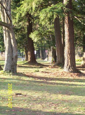 Bowen Park, Main course, Hole 17 Short tee pad