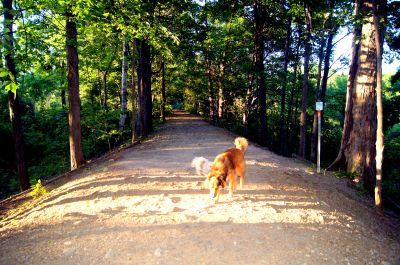White Spruce Park, Main course, Hole 3