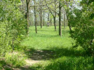 White Spruce Park, Main course, Hole 14 Short tee pad