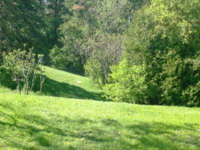 White Spruce Park, Main course, Hole 13 Short tee pad