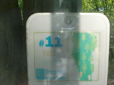 White Spruce Park, Main course, Hole 11 Short tee pad