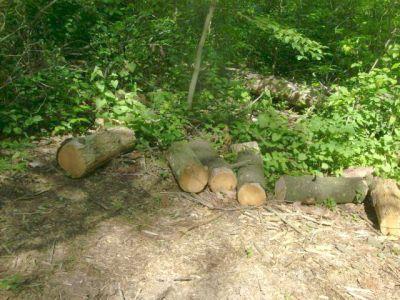 Christie Lake Conservation Area, Main course, Hole 4