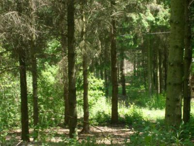 Christie Lake Conservation Area, Main course, Hole 12 Putt
