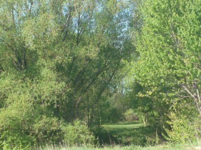 Bronte Creek Provincial Park, Main course, Hole 6 Short tee pad