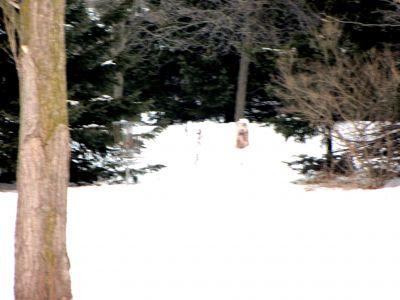Bronte Creek Provincial Park, Main course, Hole 10 Putt