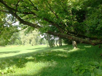 V.A. Barrie Park, Main course, Hole 15 Short tee pad