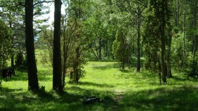 Lillsjöns Discgolfbana, Main course, Hole 8 Midrange approach