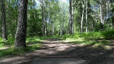 Lillsjöns Discgolfbana, Main course, Hole 10 Tee pad
