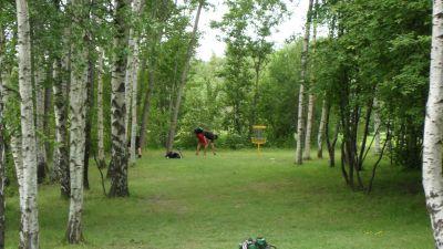 Järva Discgolf Park, Main course, Hole 7 Short approach