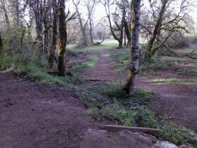 Waterloo, Main course, Hole 8 Tee pad