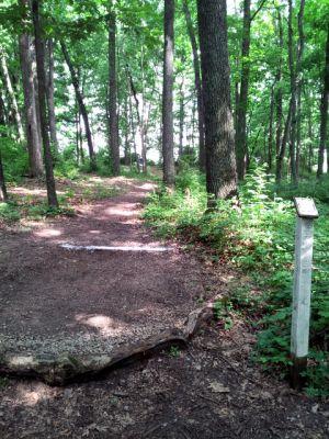 Randolph Park, Main course, Hole 9 Tee pad
