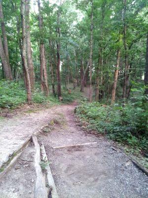 Randolph Park, Main course, Hole 8 Middle tee pad