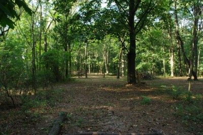 Whitetail Woods, Main course, Hole 5 Tee pad