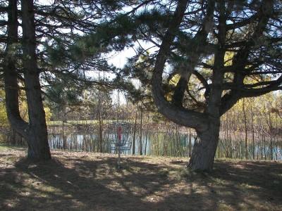 Lakeshore, The Ponds, Hole E Putt