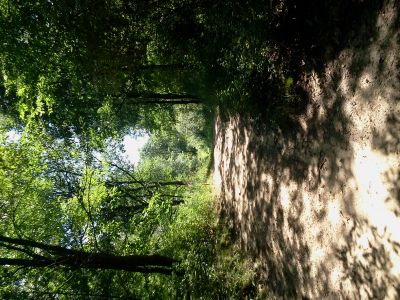 Hammond Hill, Main course, Hole 8 Long tee pad