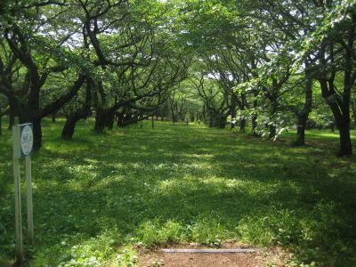 Showa Kinen Park, Main course, Hole 8 Tee pad
