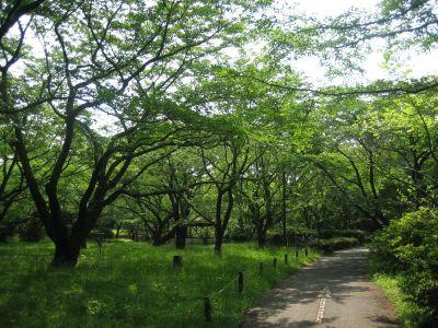 Showa Kinen Park, Main course, Hole 7 Short approach