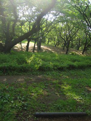 Showa Kinen Park, Main course, Hole 9 Tee pad