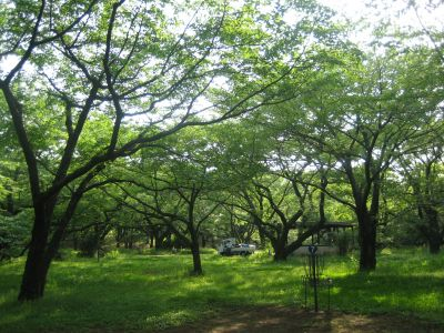 Showa Kinen Park, Main course, Hole 7 Putt
