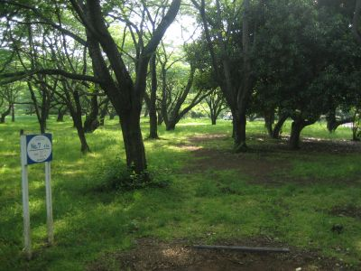 Showa Kinen Park, Main course, Hole 7 Tee pad