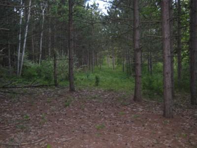 Deerfield Park, Deerfield, Hole 17 Tee pad
