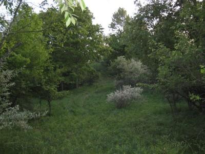 Deerfield Park, Deerfield, Hole 4 Tee pad