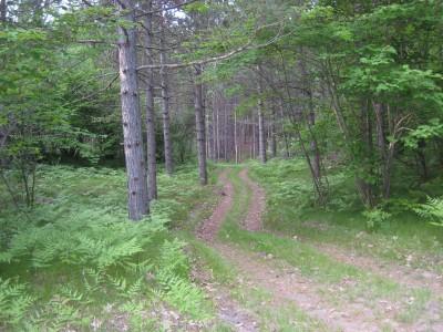 Deerfield Park, Deerfield, Hole 8 Long approach