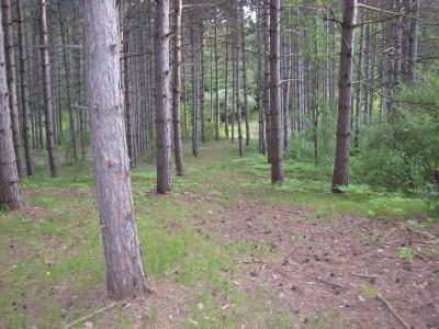 Deerfield Park, Deerfield, Hole 7 Tee pad