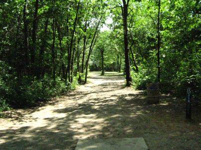 Kensington Metropark, Black Locust, Hole 15 Tee pad