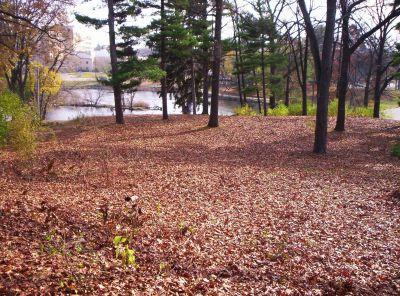 Irving Park, Main course, Hole 10 Midrange approach