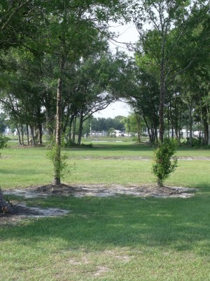Youth Park, Main course, Hole 6 Tee pad