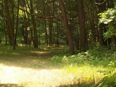 Shore Acres Park, Main course, Hole 11 Midrange approach