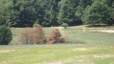 Shore Acres Park, Main course, Hole 14 Midrange approach