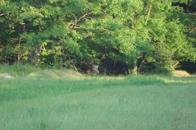 Shore Acres Park, Main course, Hole 15 Midrange approach