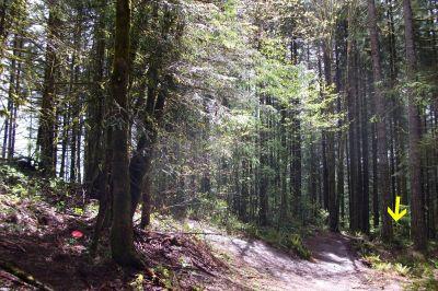 Horning's Hideout, Meadow Ridge, Hole 7