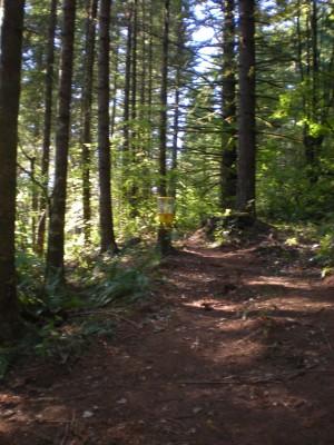 Horning's Hideout, Meadow Ridge, Hole 6 Putt