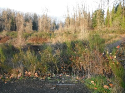 Keizer Rapids, Main course, Hole 13 Tee pad
