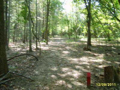 McCurdy Park, Main course, Hole 12 Tee pad