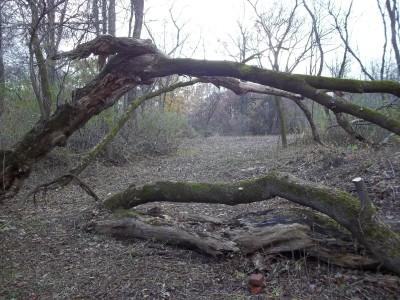 McCurdy Park, Main course, Hole 14 Tee pad