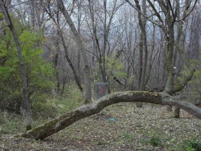 McCurdy Park, Main course, Hole 14 Putt